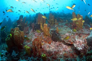 zumbi_recife_corail - Brésil