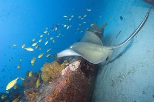 Fonds marins à Zumbi - Brésil / RN