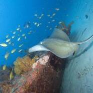 Zumbi, pour les amoureux de plongee sous marine